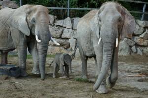 Elefantengruppe 2