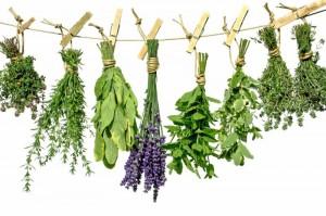 higgledy-herbs